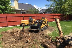 Stump Removal From Backyard