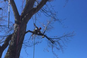 tree trim boise idaho
