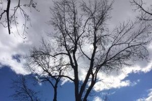 tree trimming boise idaho