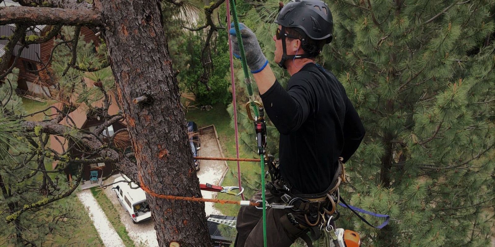 Boise Tree Removal Service Tree Trimming Stump Grinding